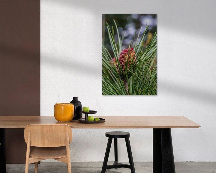 Beispiel: Tannenzapfen in Blüte 1 von Andre Klooster