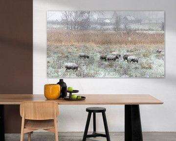 Moutons de neige dans le Zwaakse Weel sur Fotografie in Zeeland