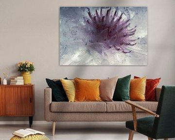 Weiße Kornblumen in Eis 2 von Marc Heiligenstein