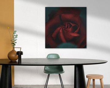 Rote Rose von Anouschka Hendriks