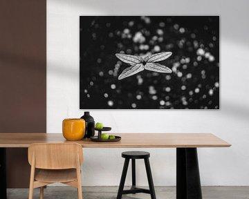 Schmetterlingssetzling im Schatten von Wouter Kramer