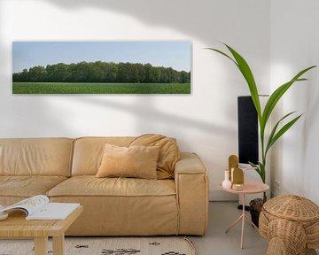 Voorjaar, met maisveld en een boswal. van Wim vd Neut