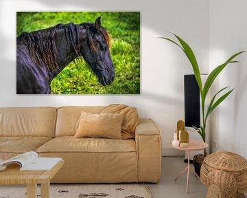 Fries paard von Harrie Muis