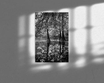 Kahle Zypressen in einem See in Tilburg von Evelien Oerlemans