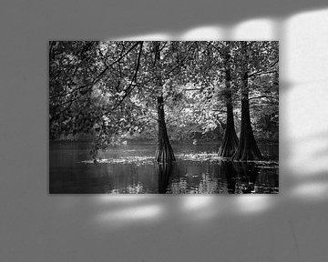 Moerascipressen in zwart-wit van Evelien Oerlemans