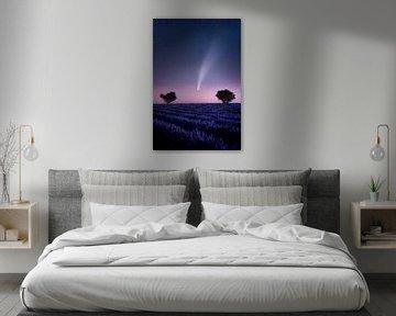 Komet Neowise c/2020 F3 im Lavendelfeld in der Provence in Frankreich. von Voss Fine Art Fotografie