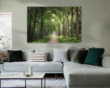De groene laan van Joris Pannemans - Loris Photography