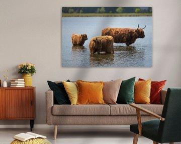 Schotse hooglander familie in het water! van Peter Haastrecht, van