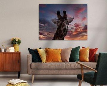 Giraffe in Afrika von HGU Foto