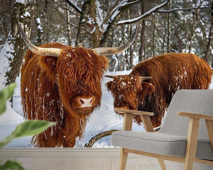 Impression: highlanders dans la neige 2 sur scott van maurik
