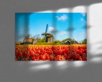 Tulpenveld met molen op de achtergrond.