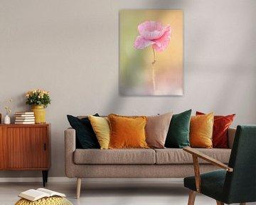 klaproos zacht roze van natascha verbij
