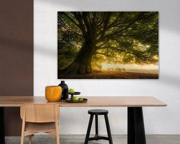 Voor uw verbeelding - Eikenboom met uitzicht van Jeroen Lagerwerf