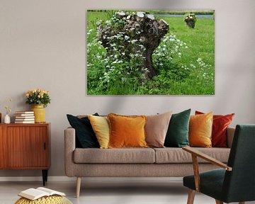 Gepollerte Weide von FotoGraaG Hanneke