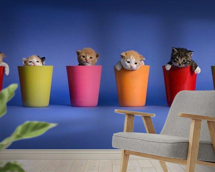 Sfeerimpressie behang: Kitten Katten Poezen van Stichting Kittenopvang Kitten&Co