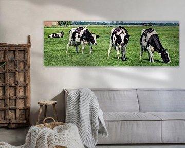 Zwartbont Koeien in de Weiland van Hendrik-Jan Kornelis