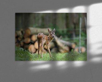 Bambi erkundet seine Welt 1 von Ines Thun
