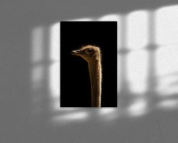 In the dark series Ostrich van Lynlabiephotography