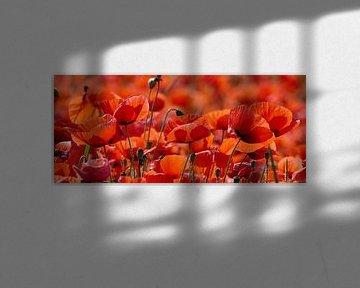 Lebensfreude, leuchtend rot von christine b-b müller