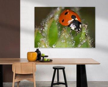 Lieveheersbeestje in de dauw sur Hans van den Beukel