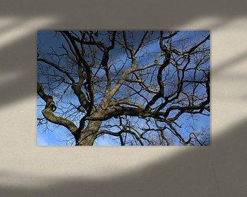 Treetop van Norman Krauß