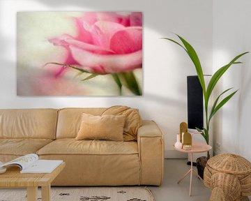Lichtroze roos van Petra Dreiling-Schewe