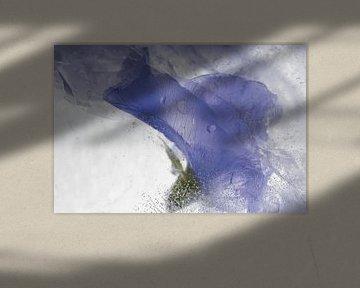 Pinke Wicken in Eis 3 von Marc Heiligenstein