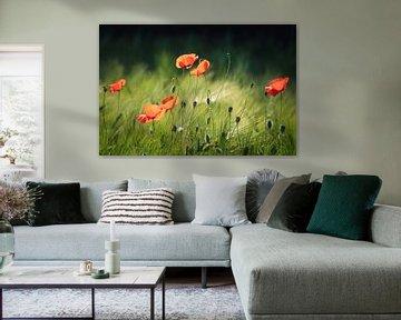 Sommer Farben von Joris Pannemans - Loris Photography
