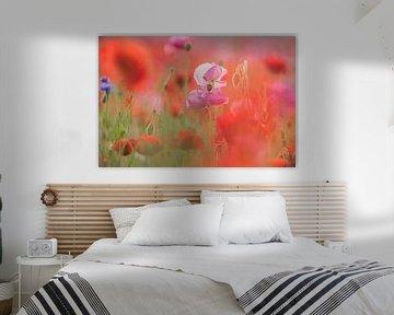 klaprozen veldbloemen van Jeannette Braamskamp