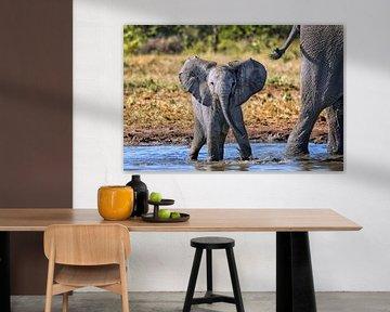 Junger Elefant spielt im Wasser, Etosha, Namibia