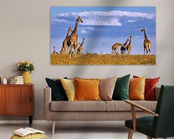Giraffenherde im Etosha Nationalpark in Namibia