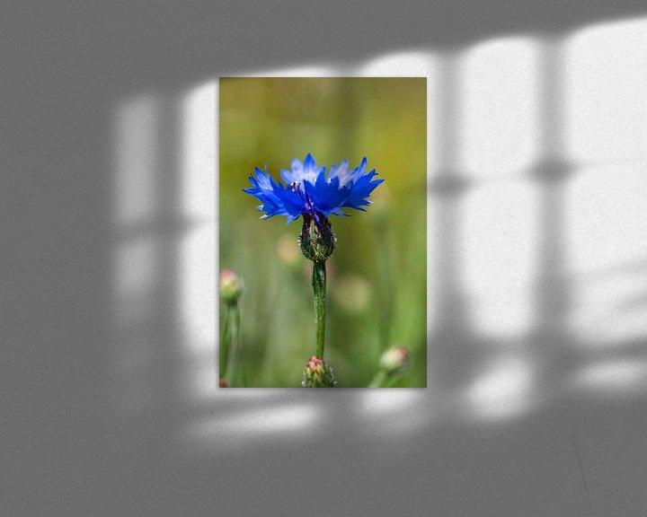 Sfeerimpressie: Korenbloem van Ingrid Aanen