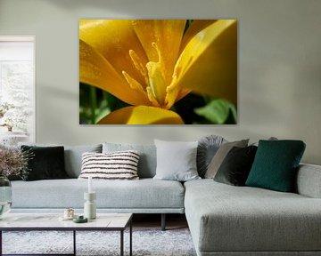 Gelbe Tulpe - Makroaufnahme Staubgefäß und Stempel von Jim Allen