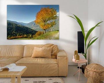 Eenzame herfstboom in de Alpen van Zuid-Tirol