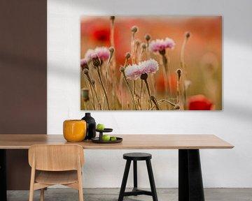 Kornblumen und Mohnblumen im Abendlicht von KB Design & Photography (Karen Brouwer)
