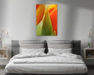 Nahaufnahme einer Tulpe von Veronika Seliverstova