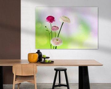 fleurs de renoncules sur Dörte Stiller