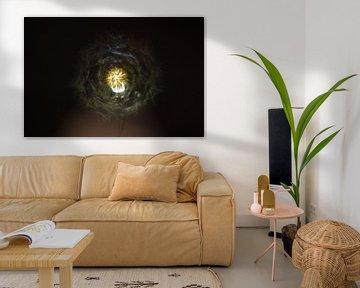 Dandelion on a Light von Benoit Demeulenaere