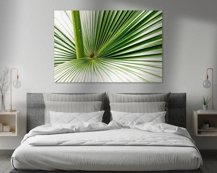 Impression: Feuille de palmier sur Tilo Grellmann   Photography