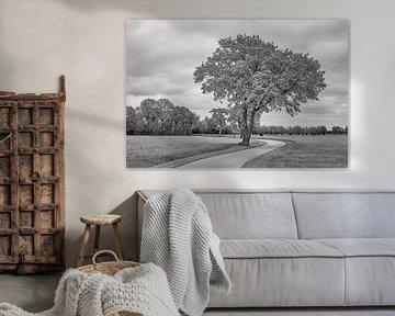 Weg durch die Wiesen in Monochrom von Jenco van Zalk