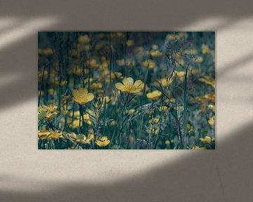 Feld voll mit Butterblumen von Buis Photography