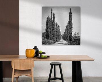 Italien in schwarz-weißem Quadrat, 'Zypressen in der Toskana'.