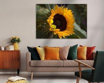 Sonnenblume von Carla van Zomeren