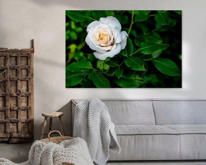 Beispiel: Weiße Rose von Fartifos