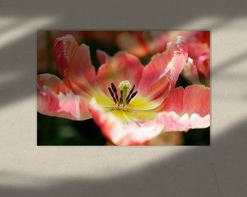 close-up van tulp van Marit Lindberg