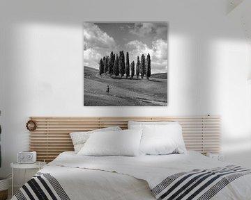 Italien in quadratischem Schwarz-Weiß, 'Die Zypressen der Toskana'.