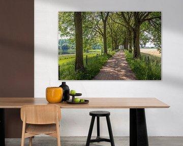 Fietspad tussen hoge bomen in een Nederlands landschap van Ruud Morijn