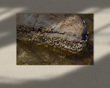 Natuurlijk strand met stenen en kleine schelpen Bornholm van arte factum berlin