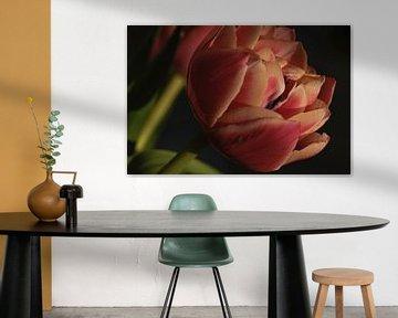 Tulpe in Nahaufnahme von Gonnie van Roij