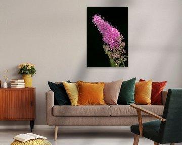 Teebaumblüte von Anne Ponsen
